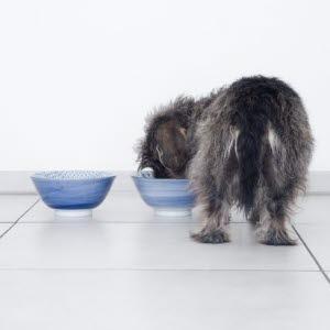 Artikkeleita allergia alalla Koira - Agria Eläinvakuutus