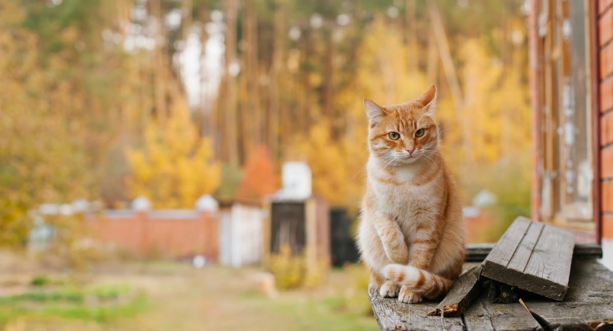 Agria Kissavakuutus