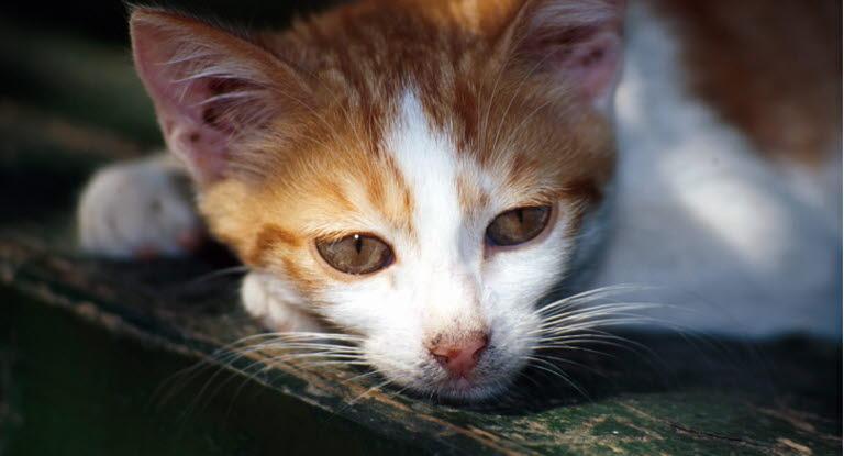 Kissa Vetäytyy Omiin Oloihinsa